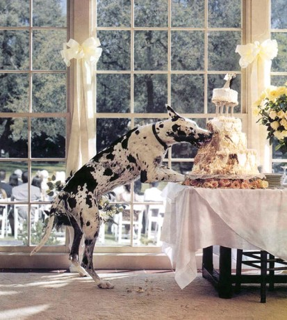 dog eats wedding cake