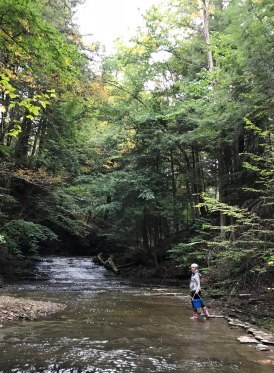 dona creek 2