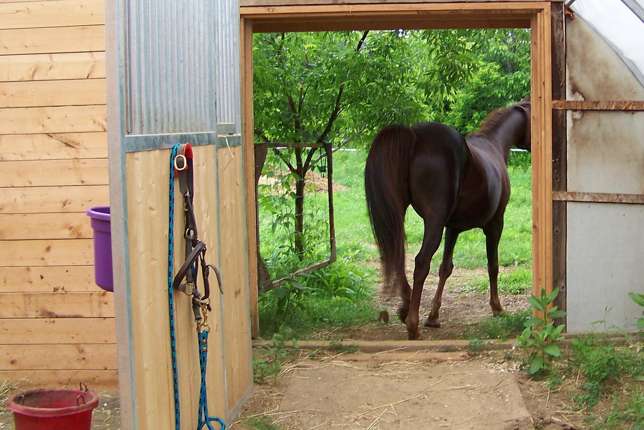 horse-leaving-barn
